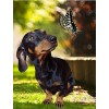 5d 2019 New Hot Sale Butterfly And Dog Diy Diamond Painting Kits UK VM9033