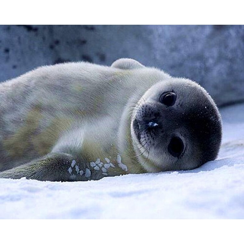 For Beginners Seal 5...