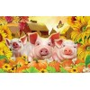 Funny Pig 5D Diy Embroidery Cross Stitch Diamond Painting Kits UK NA0334