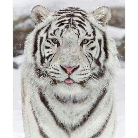 New 5D DIY Diamond Painting White Tiger Embroidery VM92088